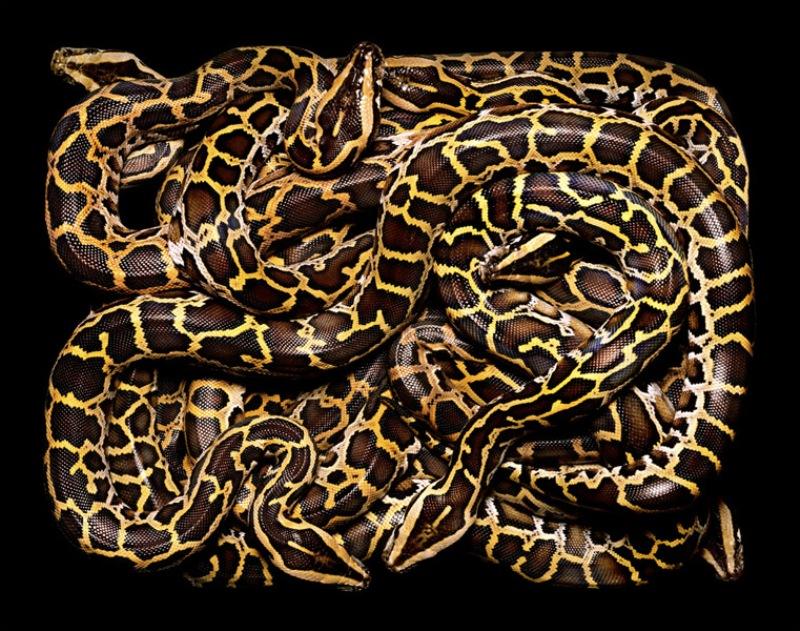 3613 Змеиная коллекция Гвидо Мокафико