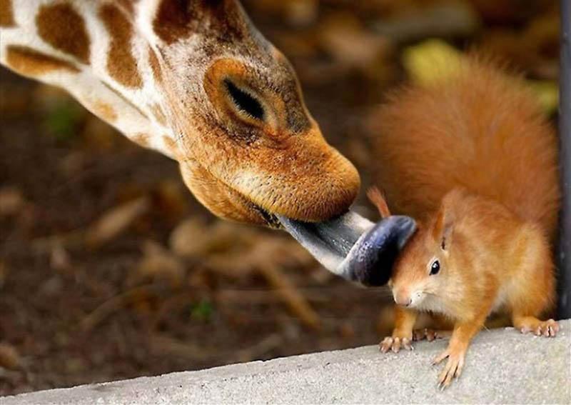 3618 40 самых удачных фотографий животных, сделанных в нужный момент
