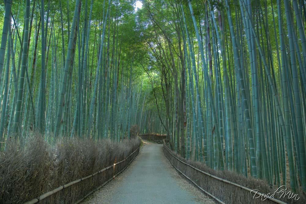 3629478731 9d17e274f6 b Бамбуковый коридор у подножья горы в Киото