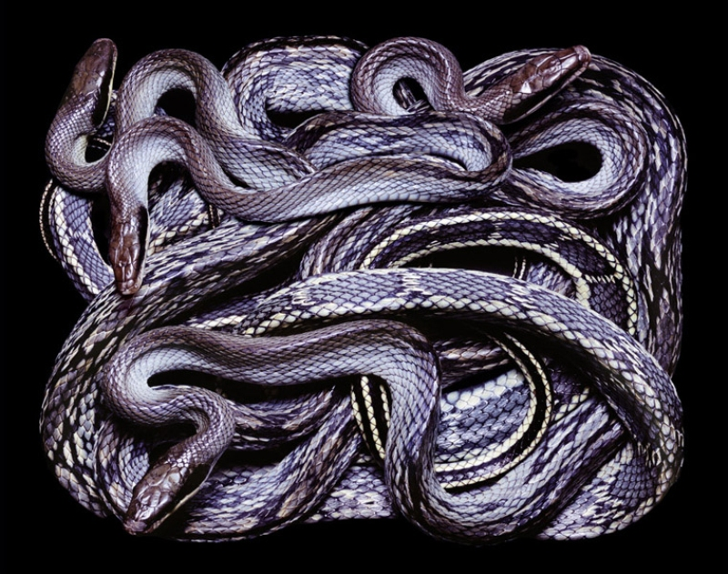 3713 Змеиная коллекция Гвидо Мокафико