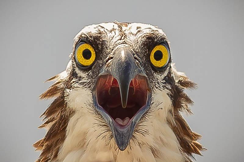 3718 40 самых удачных фотографий животных, сделанных в нужный момент