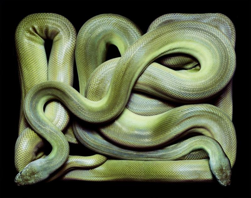 3813 Змеиная коллекция Гвидо Мокафико