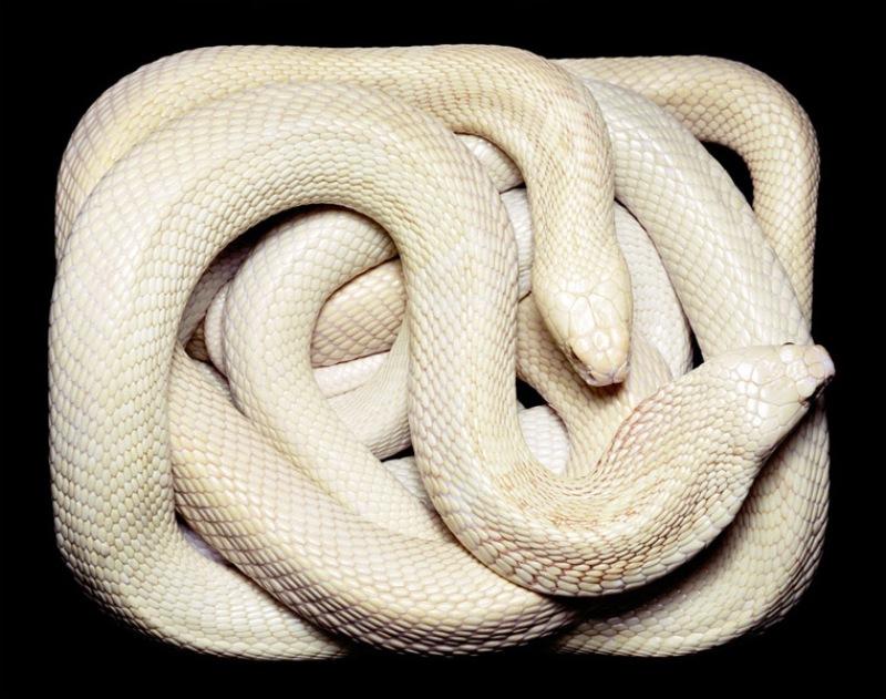 3913 Змеиная коллекция Гвидо Мокафико
