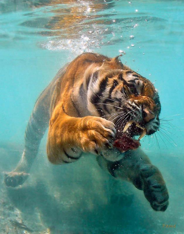 4013 40 самых удачных фотографий животных, сделанных в нужный момент