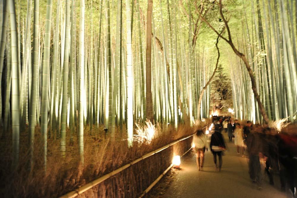 4104 Бамбуковый коридор у подножья горы в Киото