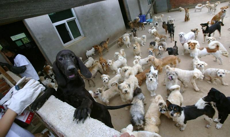 4123 800x478 Приют для бродячих животных в Нанкине