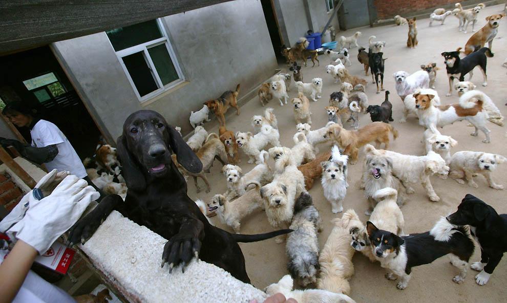 4123 Приют для бродячих животных в Нанкине