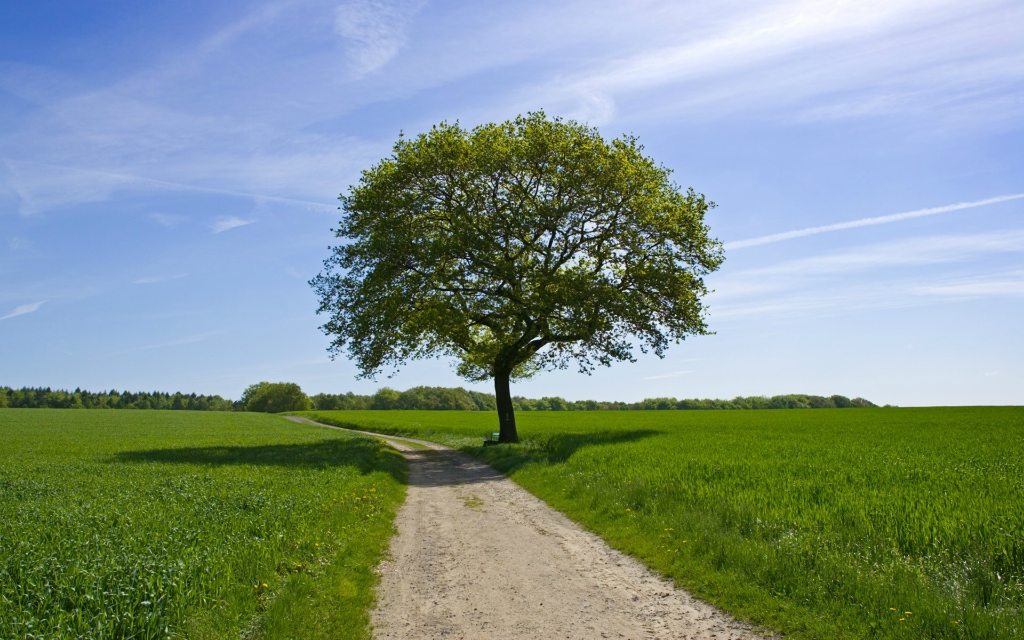 4160 Одинокие деревья на полях