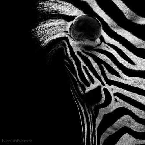 42 Темный зоопарк Ника Эваристе