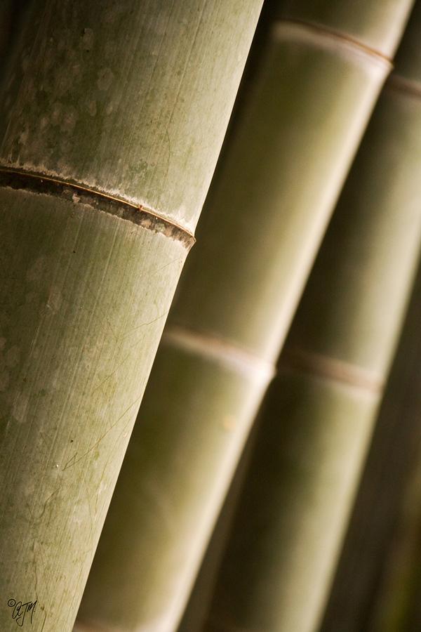 4314965818 b66a533642 b Бамбуковый коридор у подножья горы в Киото