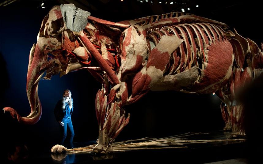 437 Животные изнутри: пластинация