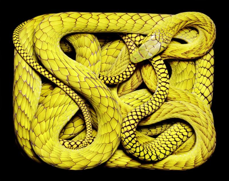 4513 Змеиная коллекция Гвидо Мокафико