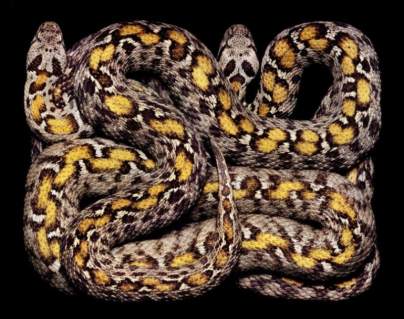 4612 Змеиная коллекция Гвидо Мокафико