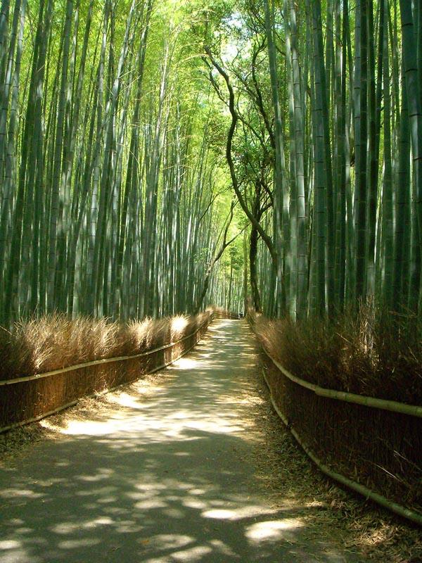 4699152191 de5cdab3eb b Бамбуковый коридор у подножья горы в Киото