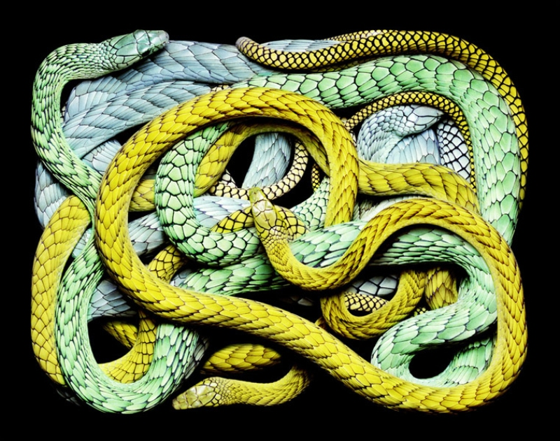 4812 Змеиная коллекция Гвидо Мокафико