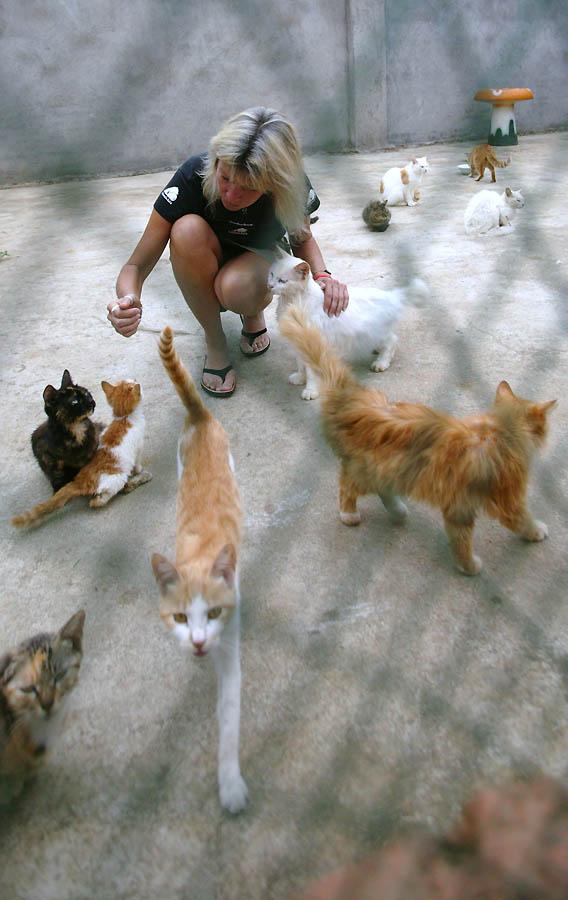 5104 Приют для бродячих животных в Нанкине