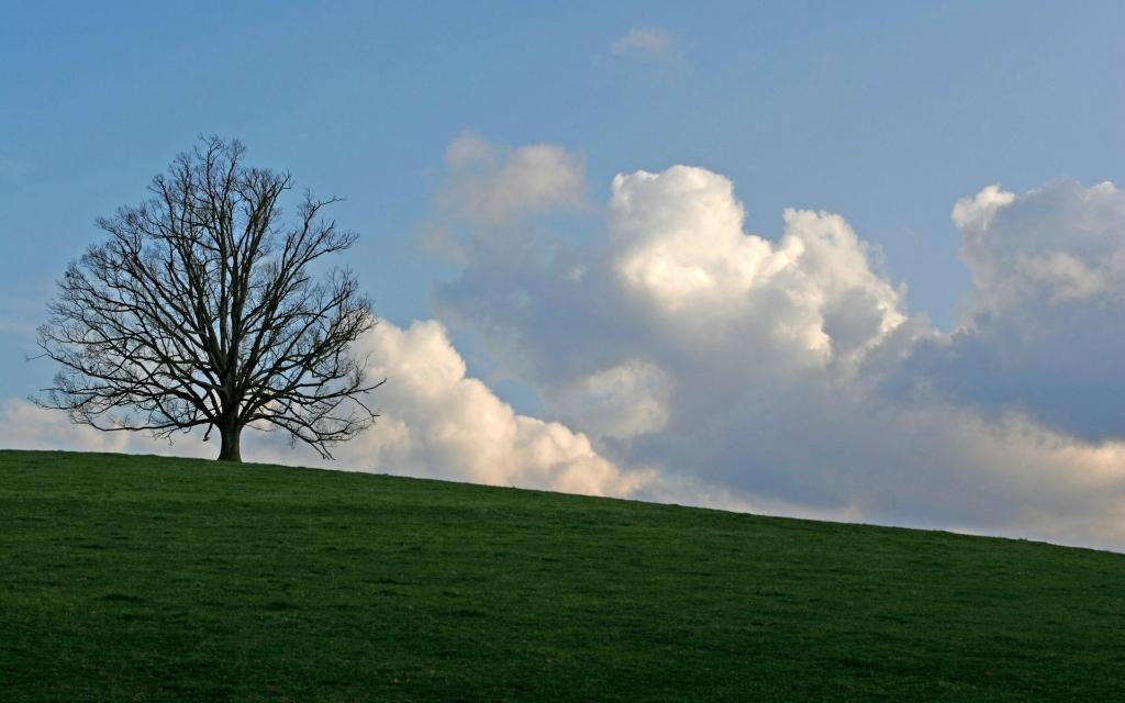 5145 Одинокие деревья на полях