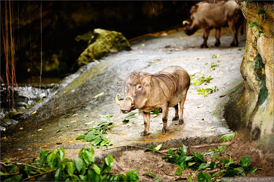 5169 Самый открытый зоопарк мира