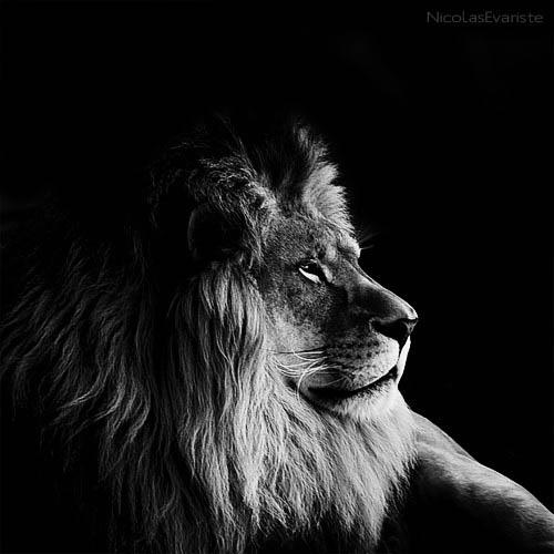 52 Темный зоопарк Ника Эваристе