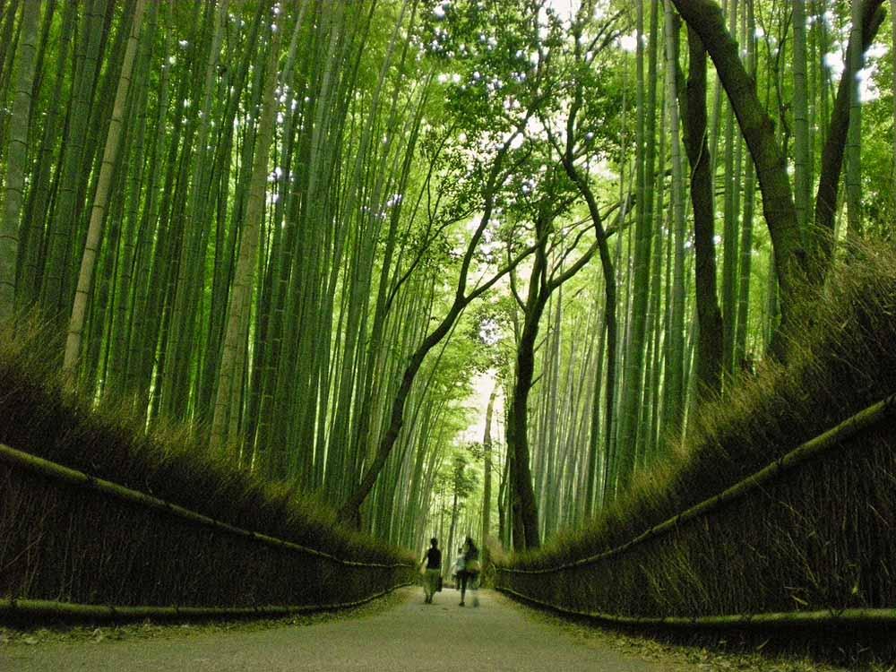 5441419800 74d4b14c9e b Бамбуковый коридор у подножья горы в Киото