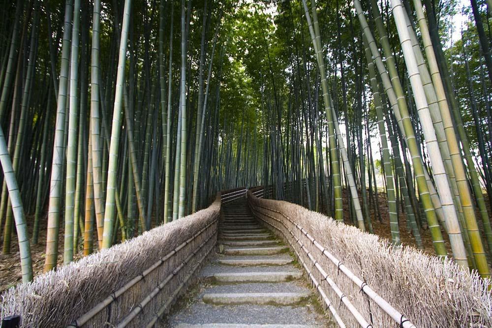 590 Бамбуковый коридор у подножья горы в Киото