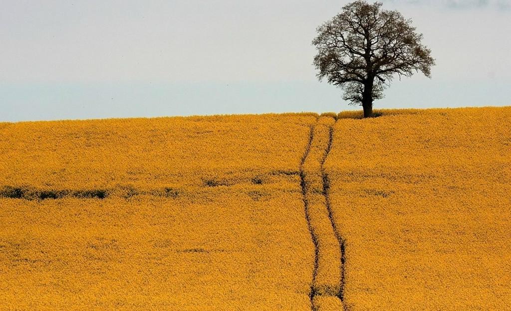 6133 Одинокие деревья на полях