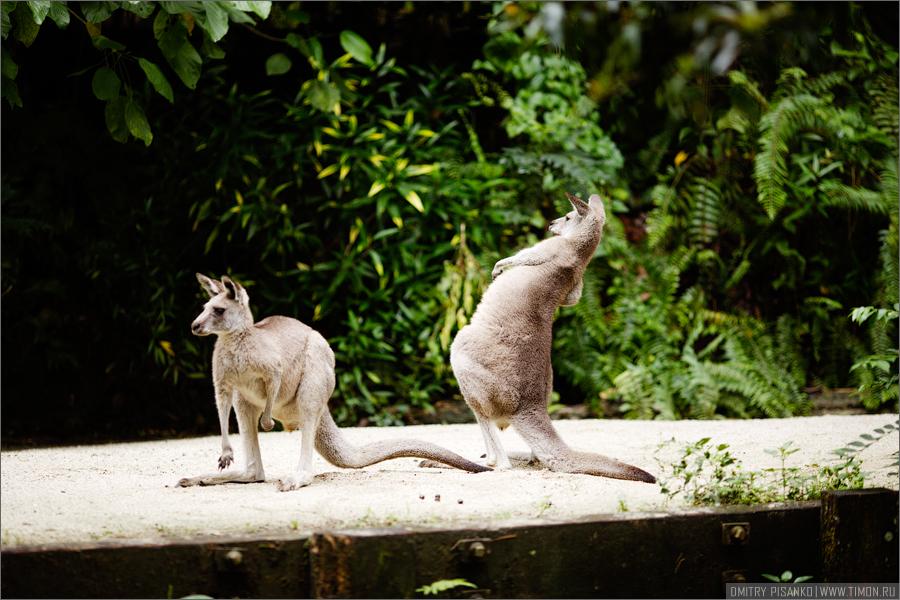 6157 Самый открытый зоопарк мира
