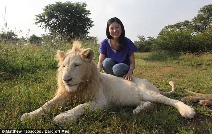 6160 Прогулка со львами