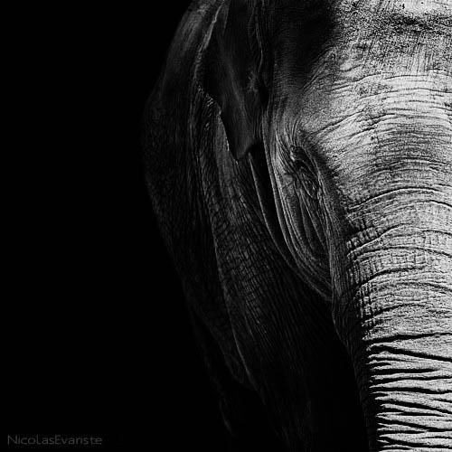 62 Темный зоопарк Ника Эваристе
