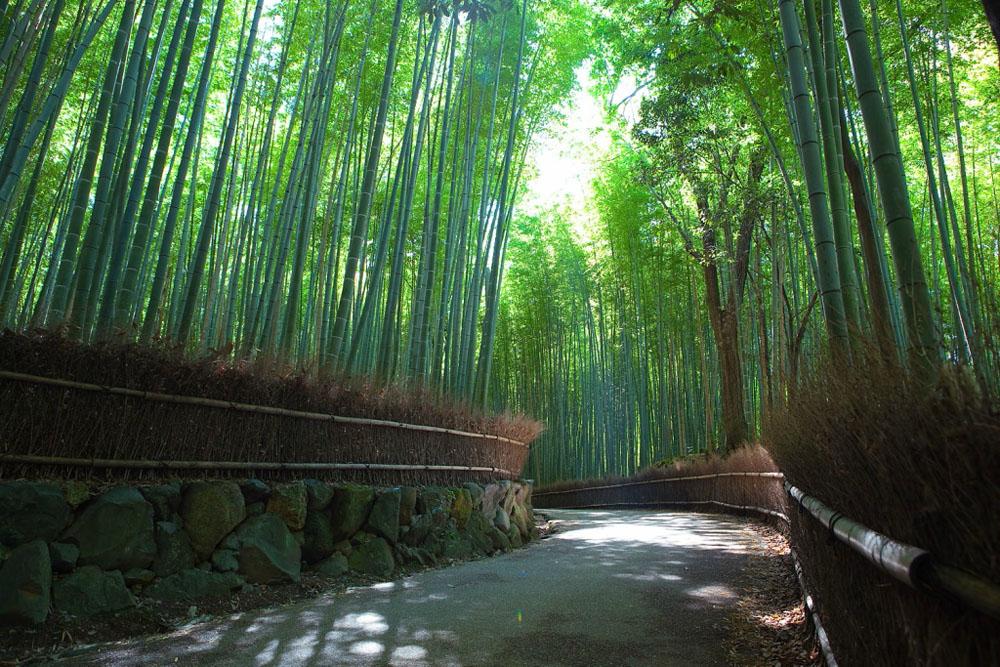 683 Бамбуковый коридор у подножья горы в Киото