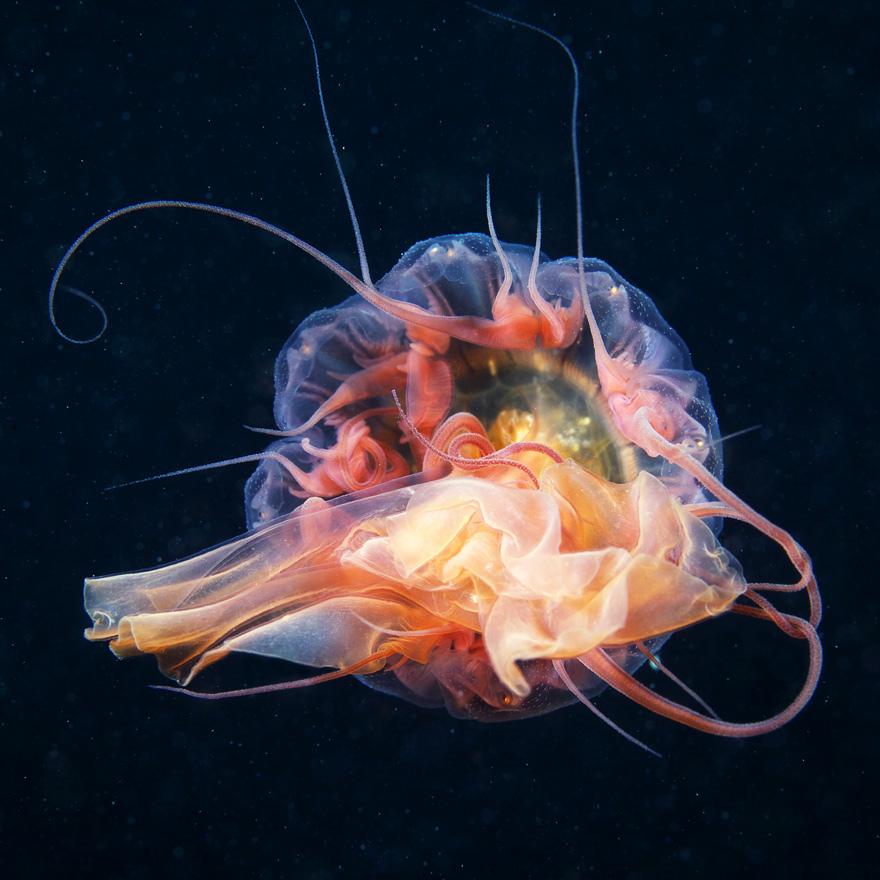 685 Подводные чудеса Белого моря на фото Александра Семенова