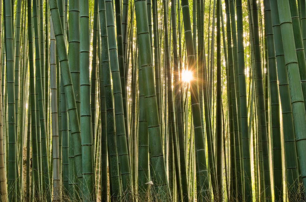 6921659803 9413e665b8 b Бамбуковый коридор у подножья горы в Киото