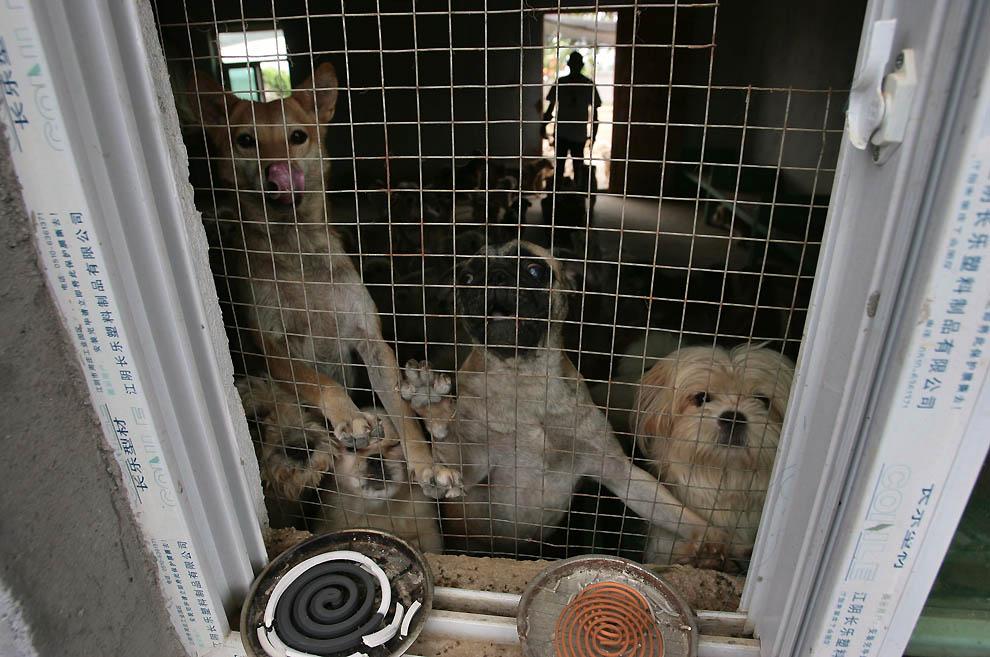 696 Приют для бродячих животных в Нанкине