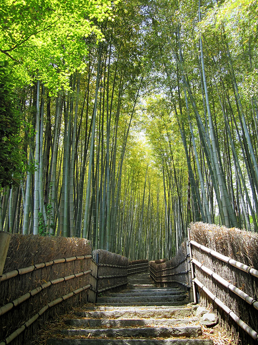 776 Бамбуковый коридор у подножья горы в Киото