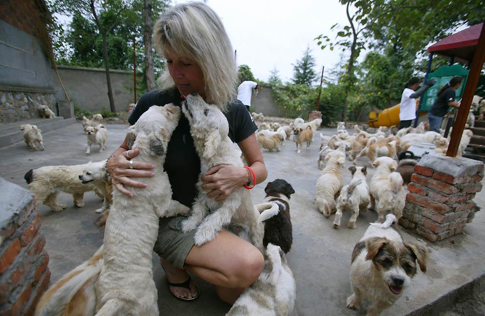 788 Приют для бродячих животных в Нанкине