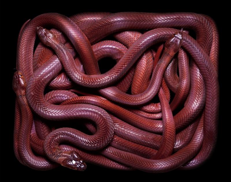 792 Змеиная коллекция Гвидо Мокафико