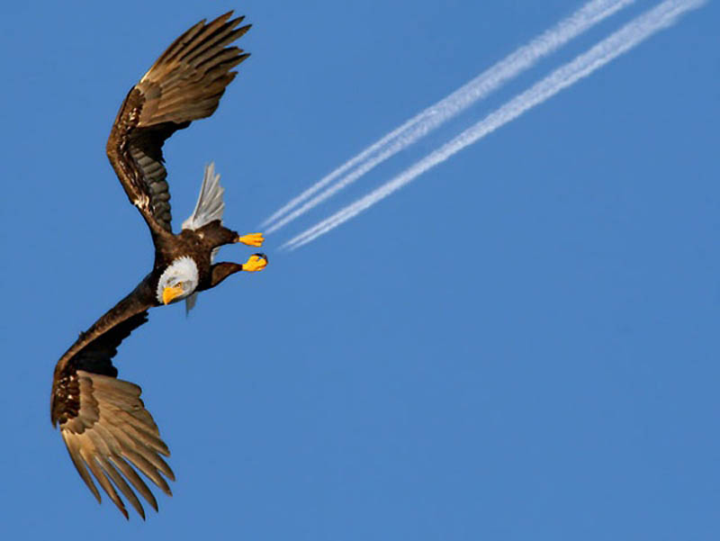 8108 40 самых удачных фотографий животных, сделанных в нужный момент