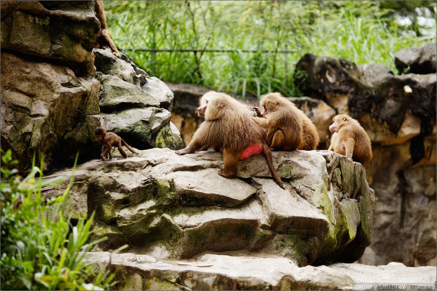 8140 Самый открытый зоопарк мира
