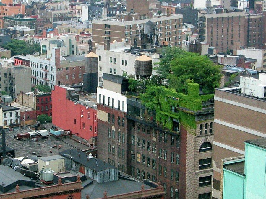 871 Сады на крышах (Часть 2)