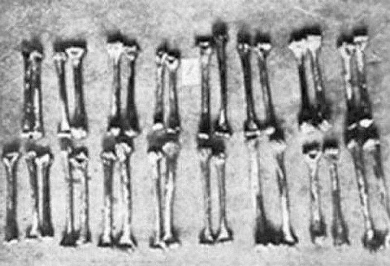 880 Фриц Хаарманн   убийца вампир, любитель сосисок с человечиной
