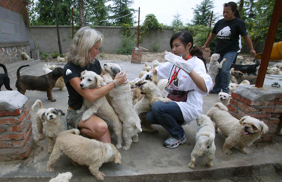 885 Приют для бродячих животных в Нанкине