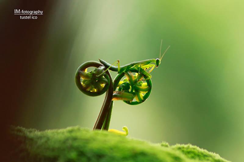 http://bigpicture.ru/wp-content/uploads/2012/04/9103.jpg