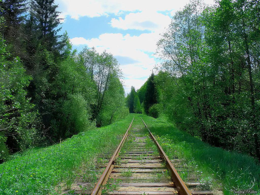 9146 Заброшенные железные дороги