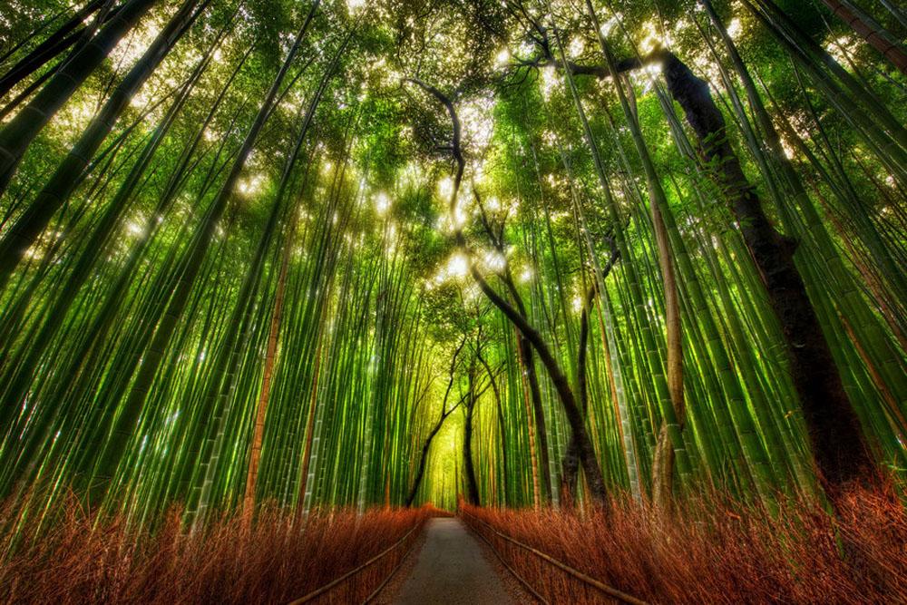969 Бамбуковый коридор у подножья горы в Киото