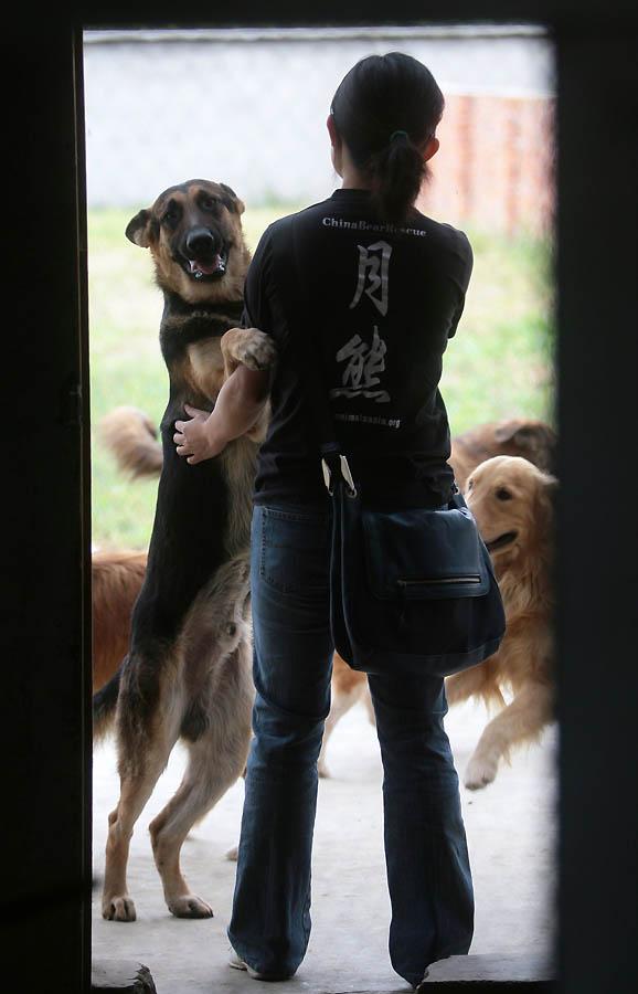 981 Приют для бродячих животных в Нанкине