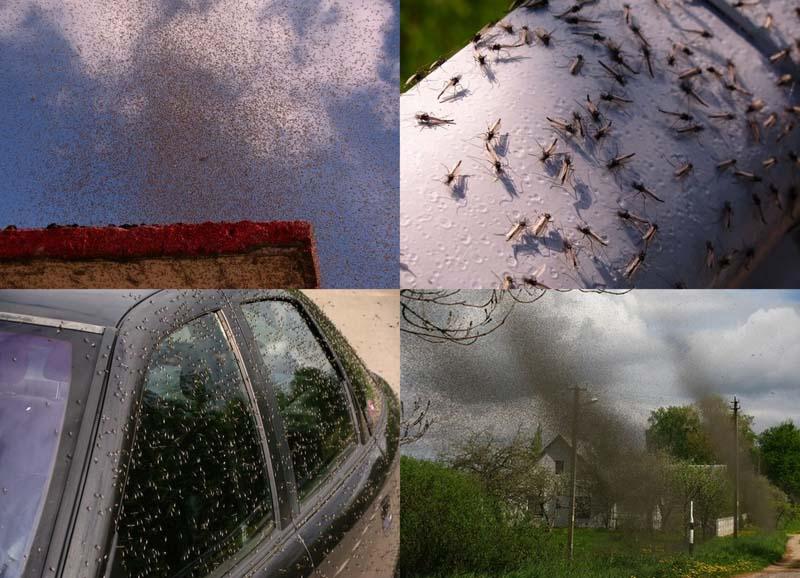 BIGPIC221 Нашествие комаров на деревню в Беларуси