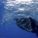 Обедающий кит едва не проглотил фотографа