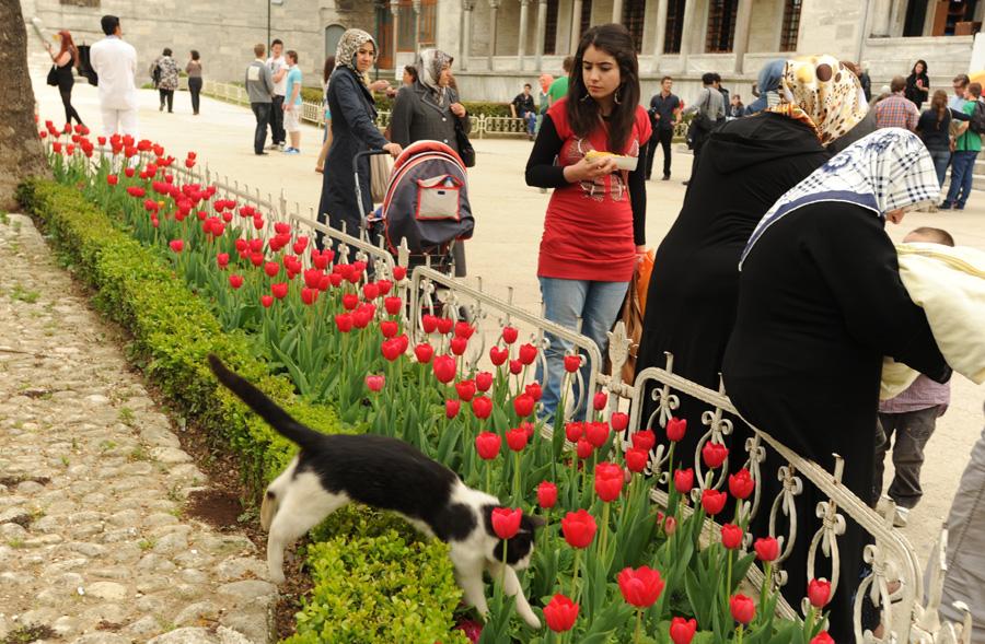DSC 6167 Четыре волшебных дня в Стамбуле