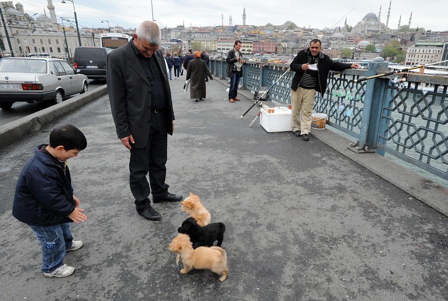 DSC 6689 Четыре волшебных дня в Стамбуле