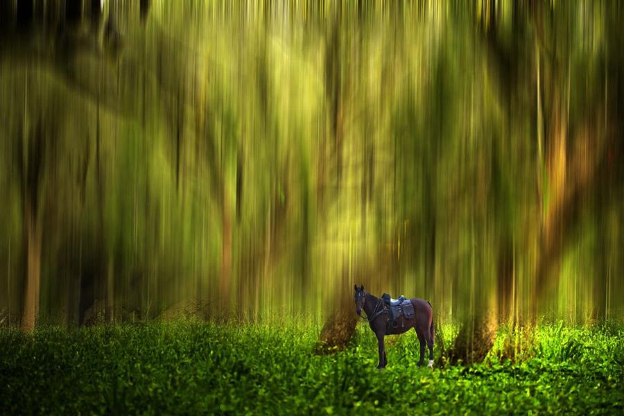 abstral6 Абстрактные фотографии Джоша Адамски